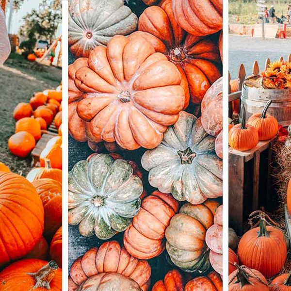 The ultimate guide to the best pumpkin patches in Kentucky, organized by region and proximity to Louisville, Lexington, and Cincinnati! Plus an interactive map.